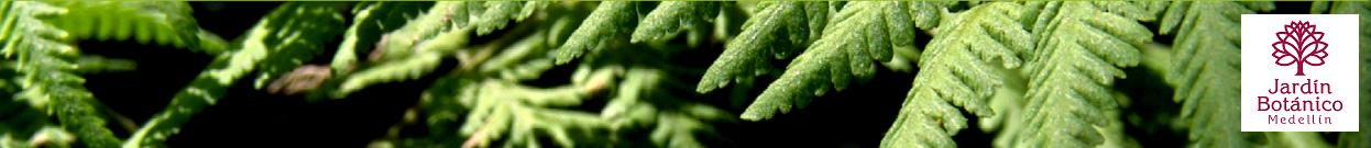 Banner Jardín Botánico